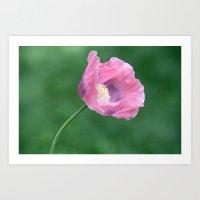 Pink Poppy Profile Art Print