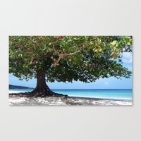 beach tree tropic Canvas Print