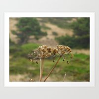 Navaro Bluffs, fall flowers IV Art Print