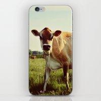 Jersey Cow iPhone & iPod Skin