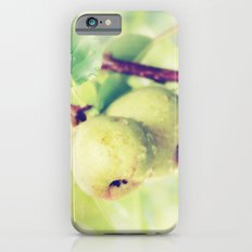 Juicy Snack iPhone 6 Slim Case