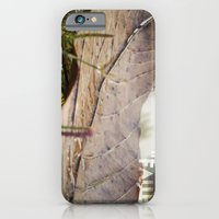 Dew drops on a fallen leaf iPhone 6 Slim Case