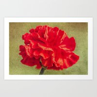 Red Carnation. Art Print