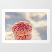 Pink Sea Urchins Art Print