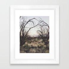 Coyote Canopy Framed Art Print