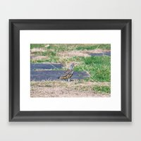summer Visit Framed Art Print