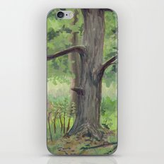 Maple in the Clearing iPhone & iPod Skin