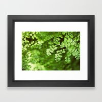 Maidenhair Framed Art Print