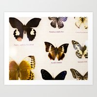 Forever Beautiful Butterfly Art Print