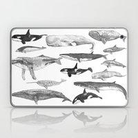 Cetology Laptop & iPad Skin