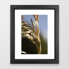 Macro flower 6 Framed Art Print
