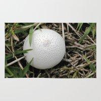 Fungus Growing In Queens… Rug