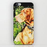 Hungarian Vizsla iPhone & iPod Skin