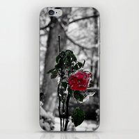 Rose in the snow iPhone & iPod Skin