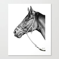 Sir Alfred - Racehorse : Graphite Canvas Print