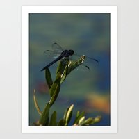Only For A Day - Dragonfly Art Print