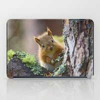 Baby Red Squirrel  iPad Case