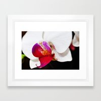 White and Purple Orchid Framed Art Print