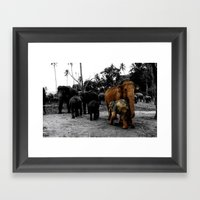Pinnawala Framed Art Print