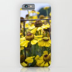 Fenced Daisies iPhone 6s Slim Case