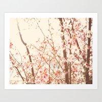 Spring Cherry Blossoms Art Print