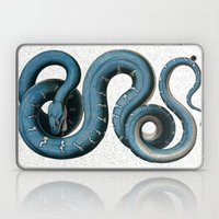 Blue White Vintage Snake Illustration Animal Art Laptop & iPad Skin