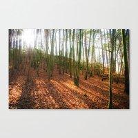 Autumn Sun And Shadows Canvas Print
