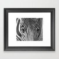 Zebra G2011-017 Framed Art Print