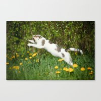 Cat, bumble-bee and dandelions Canvas Print