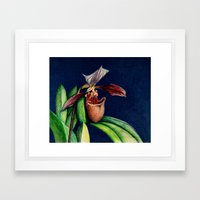 Magnificent Orchid  Framed Art Print