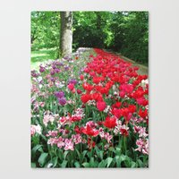 Tulips Path Canvas Print