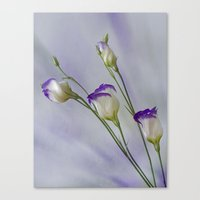 Canvas Print featuring Blue Field Daisy by Fran Walding