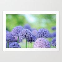Allium Dream Art Print