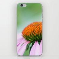 Cone Flower iPhone & iPod Skin