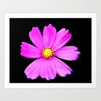 Cosmos Flower Photography Close up Macro Art Print