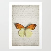 Hebomoia Glaucippe Lepid… Art Print