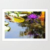 Cliche Waterlily Shot Art Print