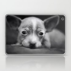 Tiny Chihuahua Laptop & iPad Skin