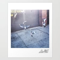 New York Wildlife Art Print
