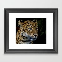Chinese Panther Cub II Framed Art Print