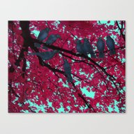 Autumn Crows, Red Maple Canvas Print