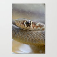 Rest Not In Peace Canvas Print