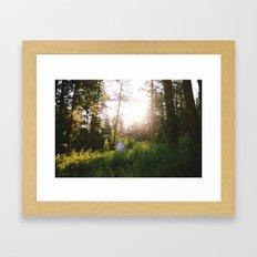 morning in the woods Framed Art Print