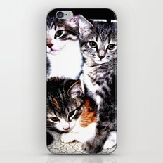 Adorable Kittens iPhone & iPod Skin