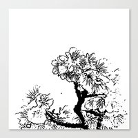 Cherry Blossom #7 Canvas Print