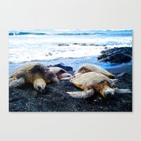 Black Sand Beach Turtles Canvas Print