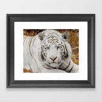 WHITE TIGER GAZE Framed Art Print