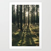 Sunlight Through A Dense… Art Print