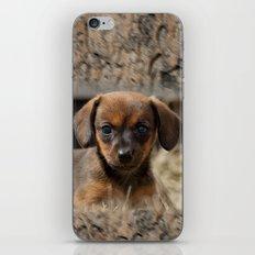 Bridgit 7 iPhone & iPod Skin