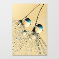 Duo Shower Dandy Drops Canvas Print